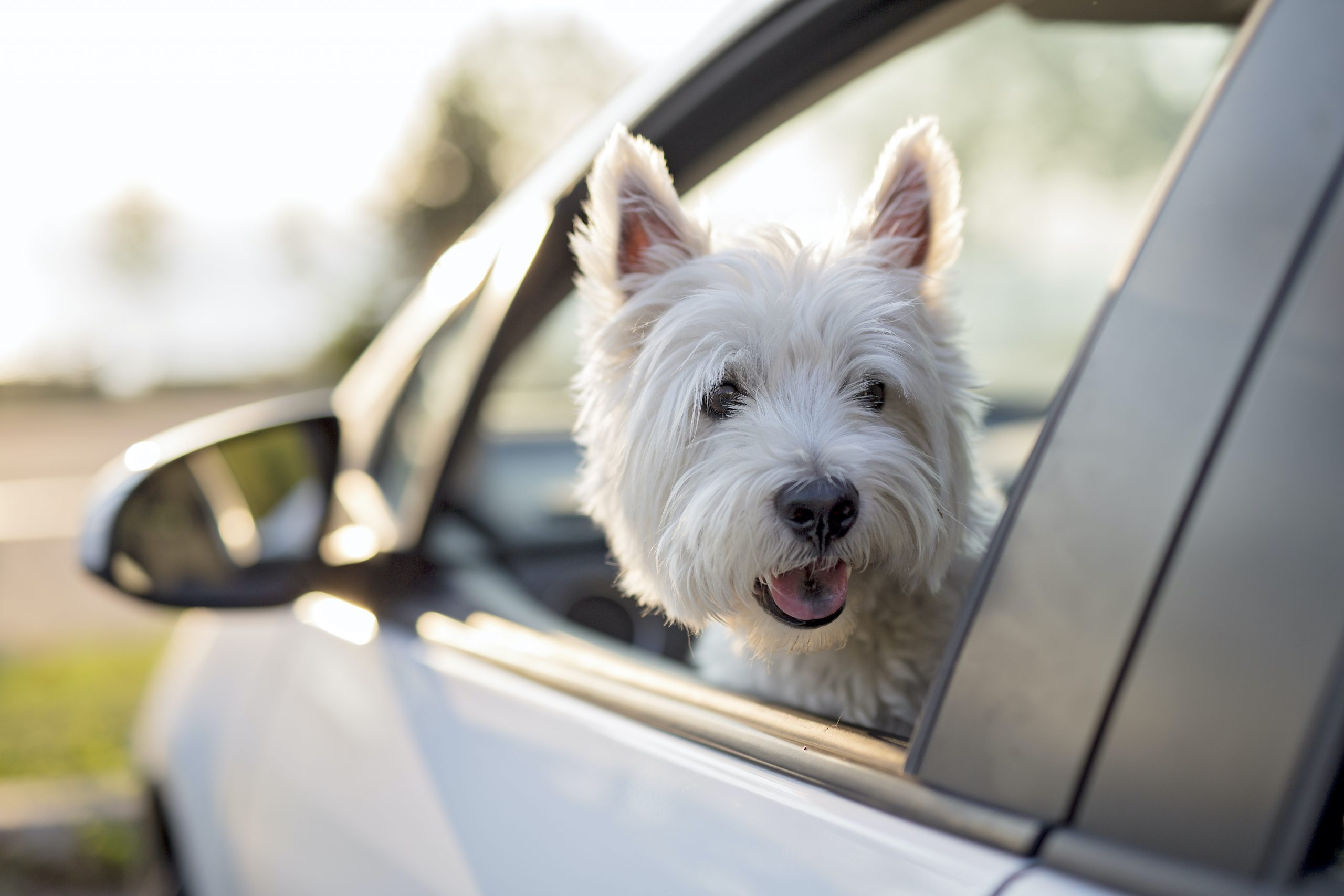 POWER PUPS: Keep your dog safe with these pet accessories